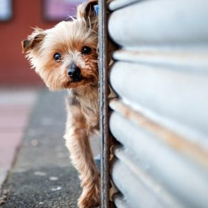 Pet Photography Australia, The Best Live Pet Photography!