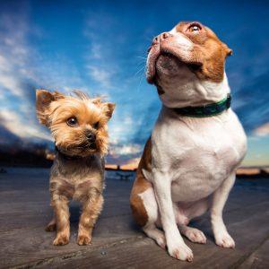 Pet Photography Australia